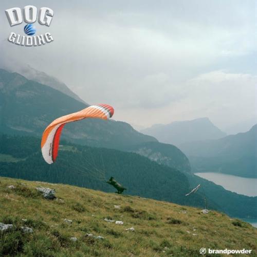 DOG GLIDING01