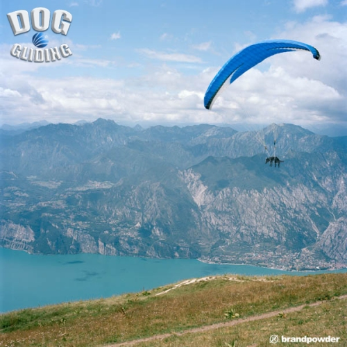 DOG GLIDING02