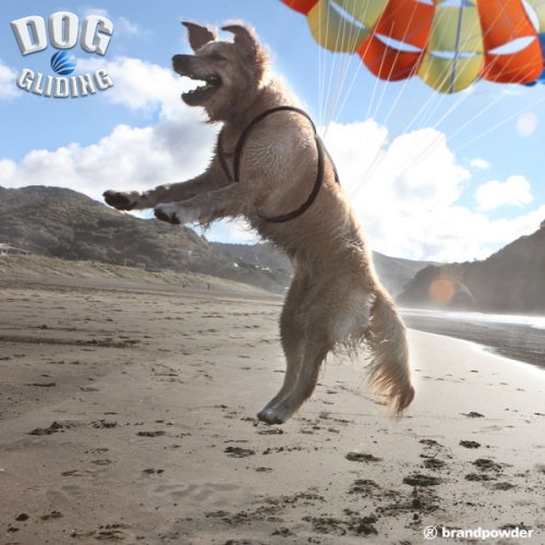 DOG GLIDING04