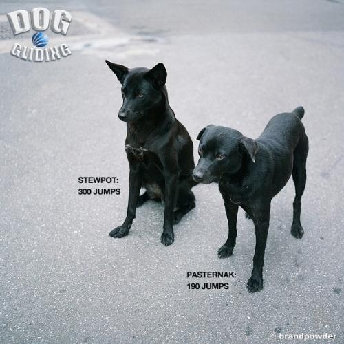 DOG GLIDING11